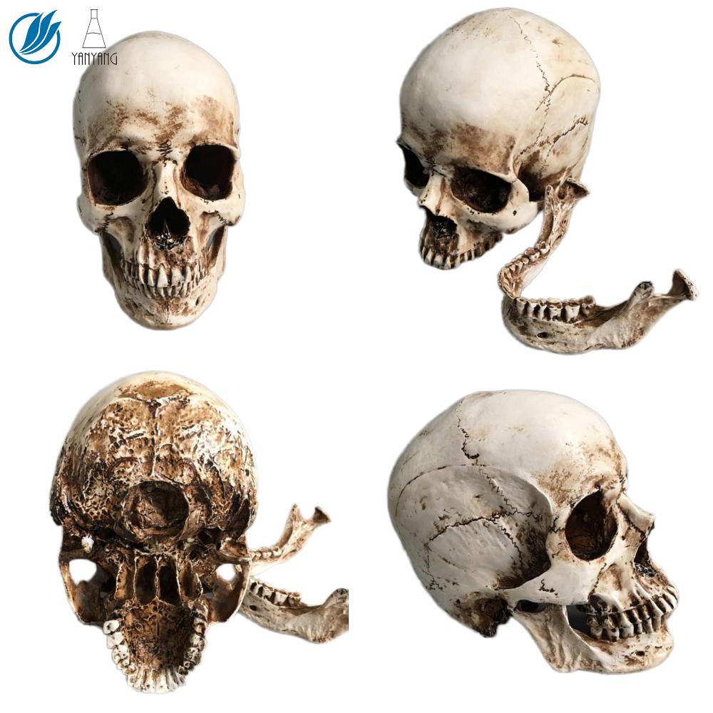 Life Size Human Head Skull Model
