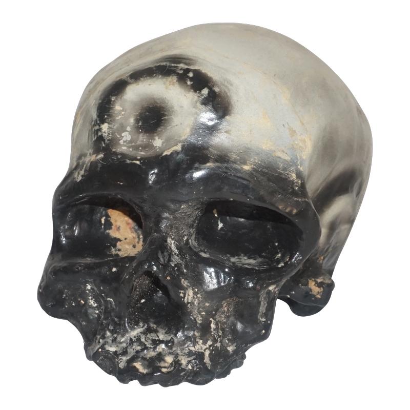 Life Size Skull Model Of Cro Magnon Man